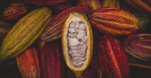 COCOA REVOLUTION PROJECT GETS A BOOST AS GOVERNMENT DISTRIBUTES 20,000 COCOA SEEDLINGS TO ISUA AKOKO FARMERS