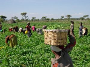 ONDO FLOATS AGRICULTURE MICRO FINANCE BANK, WITH GOVERNMENT COMMITTING N200M CAPITAL BASE